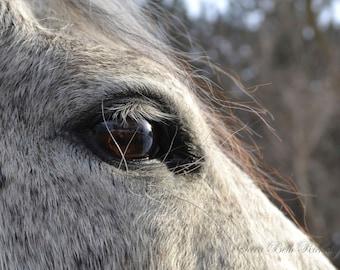 Mare Looking Over Snowy Field Photo - Horse Photo - Horse's Eye Photo - Grey Horse Photo