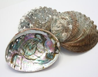 Abalone Shell for Smudging, Ritual