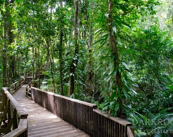 Daintree Rainforest Walking Path - Australia Photography Print