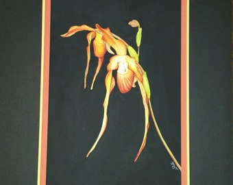 Lady Slipper Orchid original watercolor painting