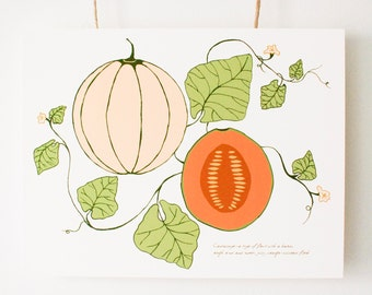 "Handmade Art Print, Botanical Melon Illustration, Fine Art Print, ""The Shape of a Melon"", Vintage, Wall Art, Fruit Drawing, Cantaloupe Melon"