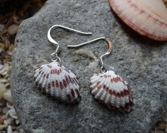Broad Ribbed Cardita Shell Earrings