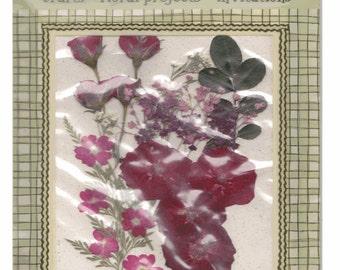 On Sale - PRESSED FLOWERS Ferns Greens - Everlasting BOTANTICALS -  Mixed lot of Burgundy Flowers