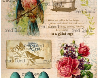 "Digital Bird Collage Sheet - 8-1/2"" x 11"" - Bird 41"