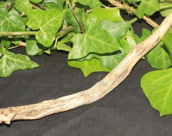 Natural Sea-Washed Cornish Gorse Wand for Love Magic - with wand bag - Pagan, Wiccan, Witchcraft