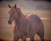 brown horse at dawn, brown horse print, horse at sunrise photo, Horse Art Print, brown horse print, Horse Photography, brown horse photo