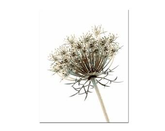 Botanical Art Prints, Nature Wall Art, Wildflower Photography