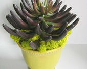 Succulent Gift, Modern Centerpiece, Fake Succulent Planter, Succulent Decor, Faux Succulent, Purple Aloe in Chartreuse Vase