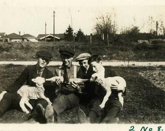 "Snapshot Photo ""Lamb Feeders"" Vintage Photo Old Antique Photo Black & White Photography Found Photo Paper Ephemera Vernacular Sheep - 182"