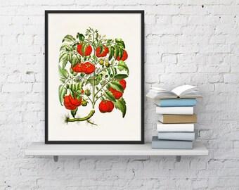 Kitchen Art- Tomatoes vegetables print Art, Giclee Print- wall art decor, Wall Hanging Veggies Kitchen poster BFL076WA4