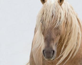 Corona - Fine Art Wild Horse Photograph - Wild Horse - Corona - Sand Wash Basin