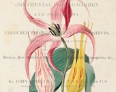 Vintage Lily Floral Collage No.14 - Botanical Print - Giclee Canvas Art Print - Poster - Home Decor - Multiple Sizes Starting at USD 15.00+