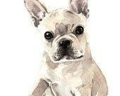 French Bulldog Puppy Giclee Print of Watercolor Painting Frenchie Light Fawn Cute Innocent Dog Lover Dog Breeds Baby Animal Gift for Her