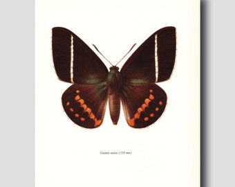 "Butterfly Print (1960s Wall Decor, Natural History Book Art) Vintage Butterfly Print --- ""Day Flying Butterfly"" No. 44-2"