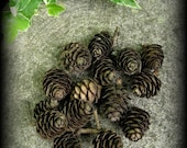 Pine Cones, Small - Witchcraft, Shaman, Magic, Wicca, Pagan