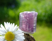 Watermelon Tourmaline Crystal, Purple & Pink, VERY RARE Brazilian, Raw Rough Crystal 3.9g/19.5ct - 16mm Third Eye and Heart Chakra (17-754)