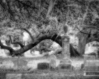 Cemetery Charleston South Carolina Headstones Live Oak Tree Spanish Moss Black and White Fine Art Photography Print