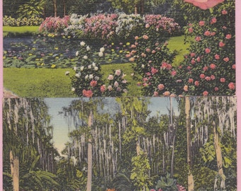 """Pair of Ca. 1940's """"Reflecting Pool and Camellia Time"""" Cypress Gardens, FL LinenTopographical Picture Postcards - 2157"""