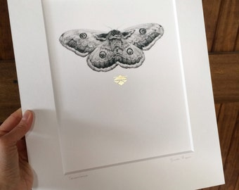 Perseverance - Moth Graphite Drawing with Hand-Applied 24 Karat Gold Leaf Embellish