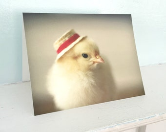 Chicken in A Red Straw Hat Folded Photo Chicks In Hats Card Baby Animal Photography