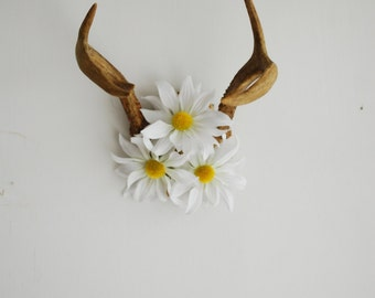 Vintage Deer Antlers with Daisies - Daisy Floral Flowers White Yellow Wall Hanging Taxidermy Small 6 Point Rack Home Boho Decor Decoration
