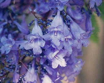 Jacaranda - Photographic Print - Australia, purple, Bohemian, green, travel, purple, boho, sydney, nursery, Wall, Decor, Hanging,