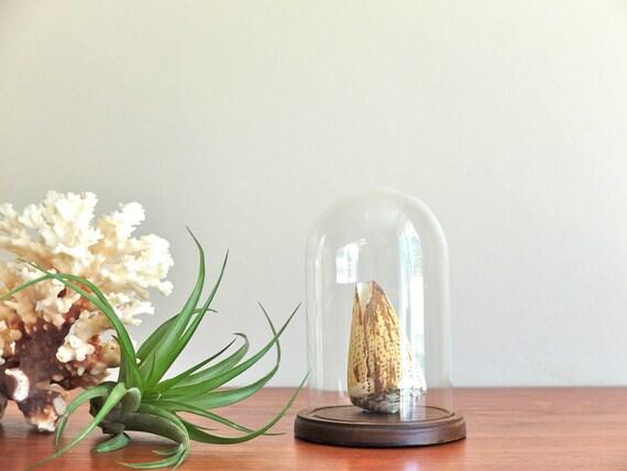 cloche en verre dome vintage pr sentoir cabinet de. Black Bedroom Furniture Sets. Home Design Ideas