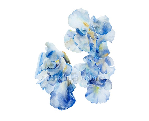 Blue irises digital download from original watercolor clipart, cottage chic style painting flower illustration