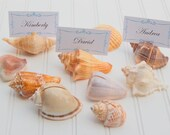 Assorted Sea Shell Place Card Holders (10pc) - Beach Wedding Decoration - Coastal Decor