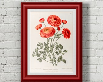 Botanical print. Botanical art. Antique botanical print. Botanical poster. Flower print. Flower prints wall art. Wall art prints.