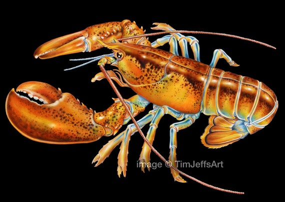 Maine Lobster Colored Pencil Drawing