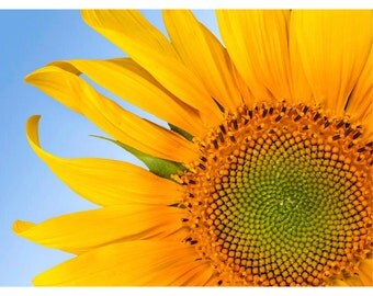 Sunflower: blank photo notecard. Printed on metallic photo paper - makes a terrific get well card.