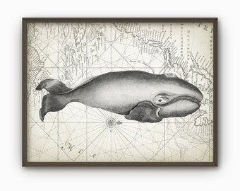 Whale Wall Art Poster Marine Biology Print Whale Chart Print Nautical Poster