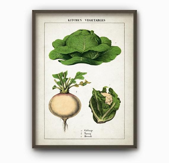 Kitchen Decor Vegetables: Kitchen Vegetables Antique Botanical Wall Art By QuantumPrints