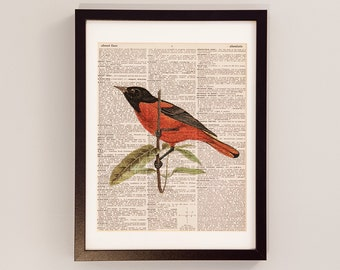 Vintage Baltimore Oriole Bird Dictionary Print - Bird Art - Print on Vintage Dictionary Paper - Orange and Black Oriole - Wildlife Art