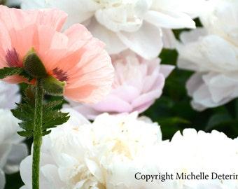 Poppy with Peonies - Digital Photography, Peony Photography, Flower Art, Flower Photography, Botanical, Pastel Flowers, Poppy, Flower Decor,