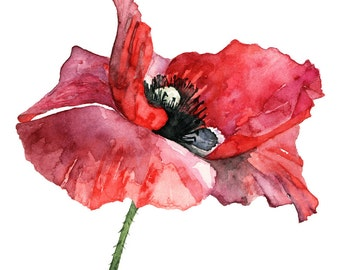 "Red Poppy Painting - Print from my Original Watercolor Painting, ""Dressed in Red"", Red Flower, Poppy Painting, Watercolor Flower, Poppies"