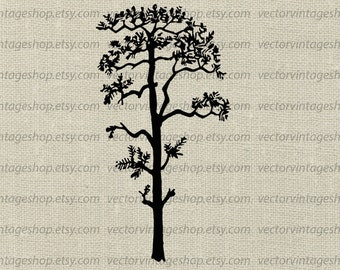 Pine Tree Vector Clipart, Tree Silhouette Clip Art, Commercial Use, Instant Download Graphic, Botanical Art Illustration