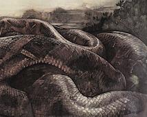 vintage Jungle Book illustration Kaa Python Snake victorian 1903 Kipling Mowgli Art Deco
