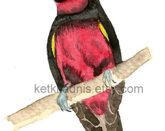 12  June 2015, Day 163 - Black and Red Broadbill - Original ACEO watercolor painting