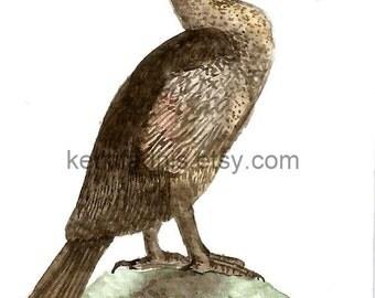 19  June 2015, Day 170 - Flightless Cormorant - Original ACEO watercolor painting
