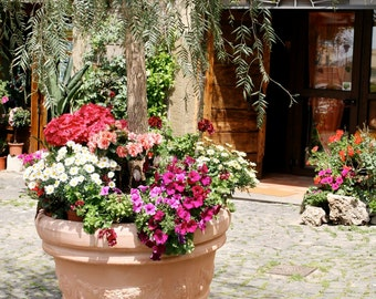 Italy Photography - Flower Pot Photograph - Summer Photography - Frascati Italy Print - Brown Doors - Italian Wall Art - Travel Photo - Pink