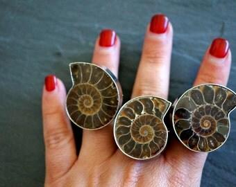 Ammonite Fossil ⊿ Ammonite Ring ⊿ Ammonite ⊿  Fossil Ring ⊿ Genuine Fossil ⊿ Ammonite Silver