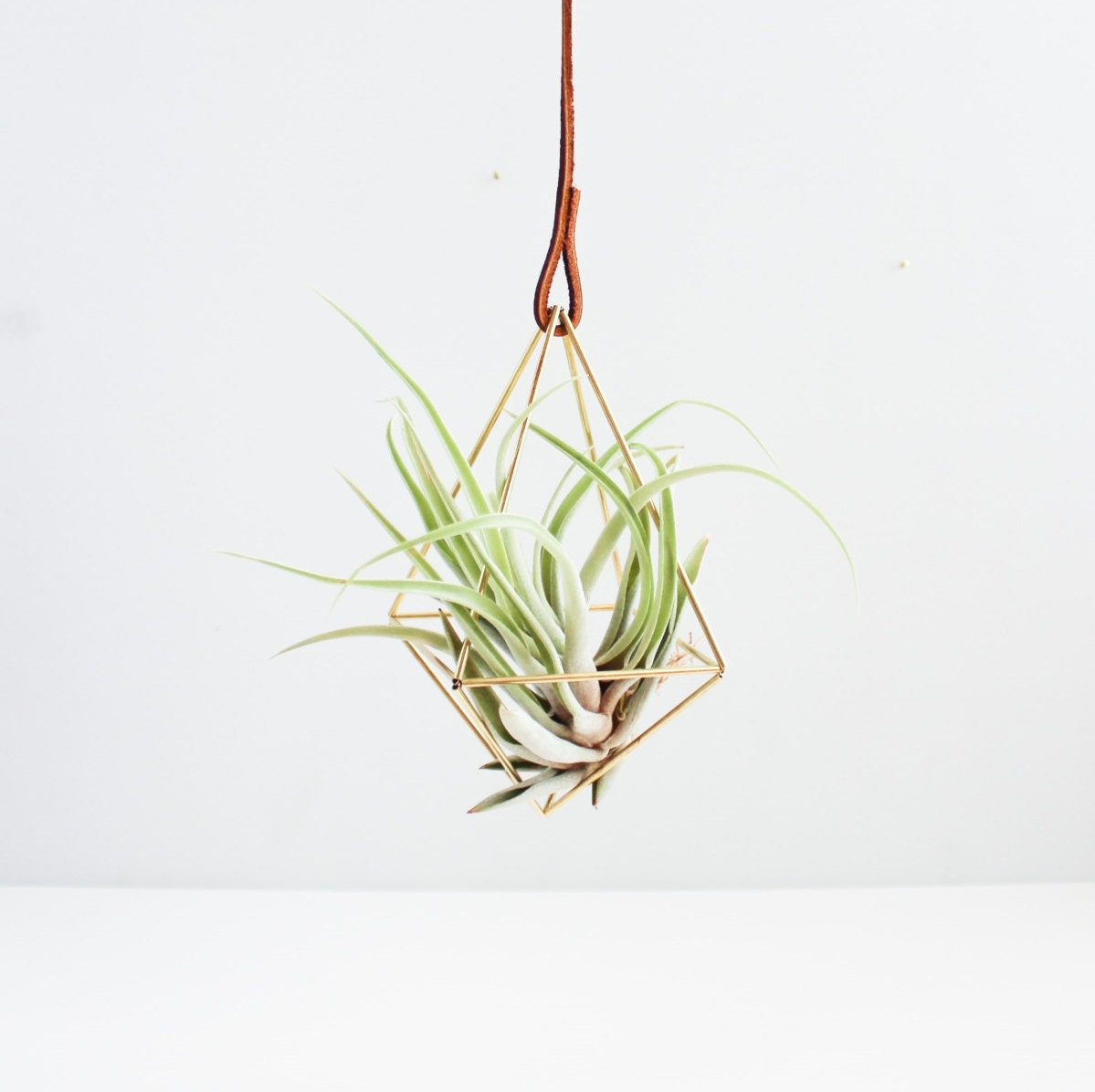 The diamond brass air plant holder modern minimalist for Geometric air plant holder