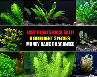 8 Aquarium Plants Bundle - Various Kinds - Anacharis, Amazon and more!