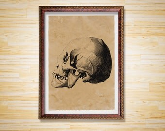Old Skull poster Anatomy print Antique decor