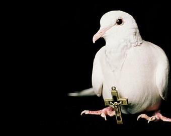 Holy Nuisance, Turtle Dove, Crucifix, Cross, Bird, Studio, White Dove, Albino, Christian, Catholic, Baptist, Protestant, Southern Baptist