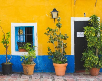 Bursts of Color in Marbella | Spain Photography