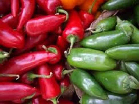 Jalapeno hot pepper vegetable seeds use green peppers for fresh eating