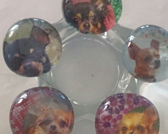 Chihuahua themed paperweight ashtray coin paperclip holder office